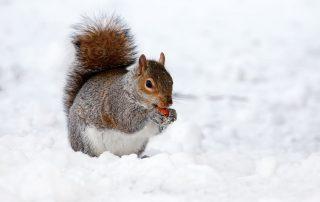 Hoe zit het met aansprakelijkheid voor sneeuw en ijs op je oprit?